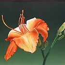 Flower Orange by jsalozzo