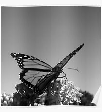 Butterfly in a Square Frame Poster