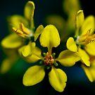 Beautiful Yellow Blur by Jonathan Bartlett