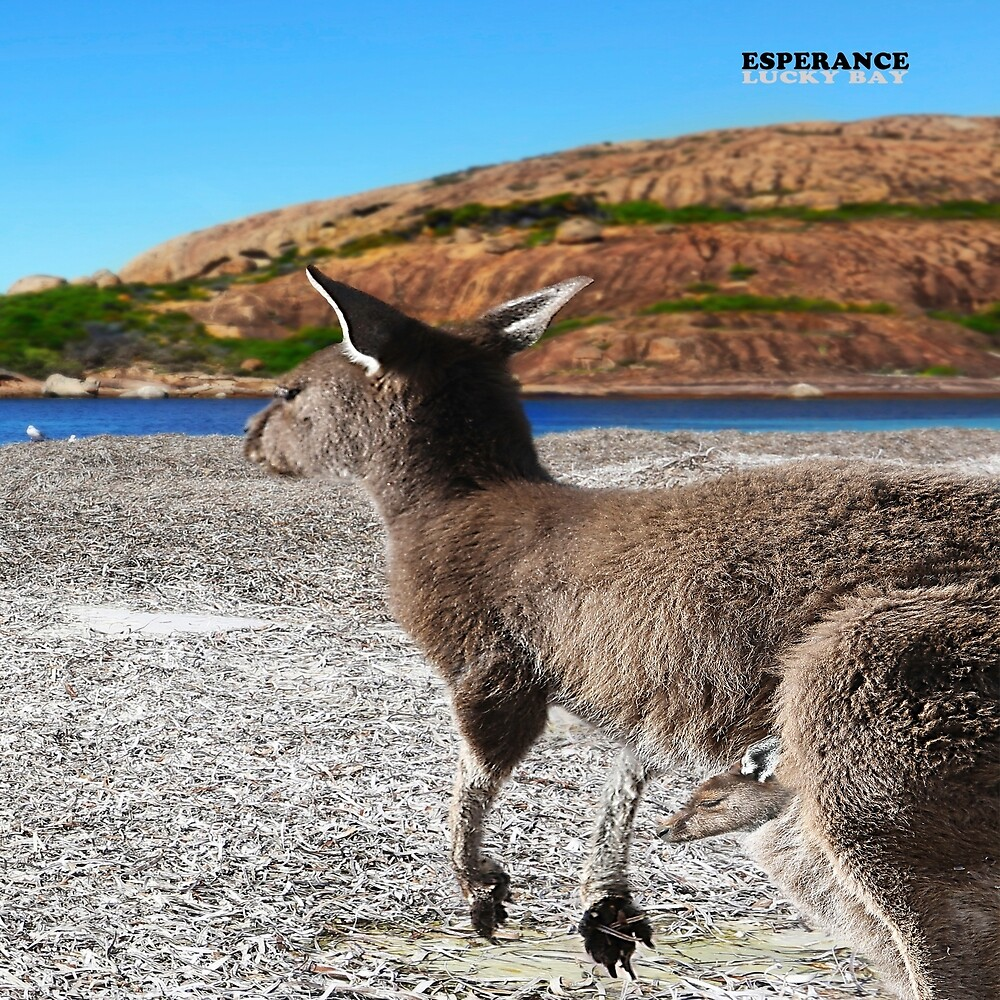 kangaroo at lucky bay by tania-arts