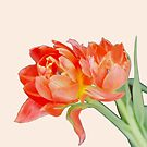 Peachy Tulips by Kasia-D