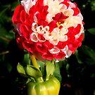 Dalia Red-White  by Eugenio