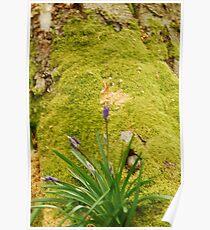 moss woodland Poster