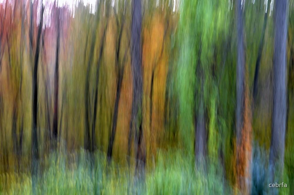Whispering Trees - Fall by cebrfa