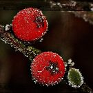 Berries on Ice by Julesrules