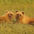 Twins!! by Anthony Goldman