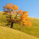 Appalachian Oak by Beth Mason