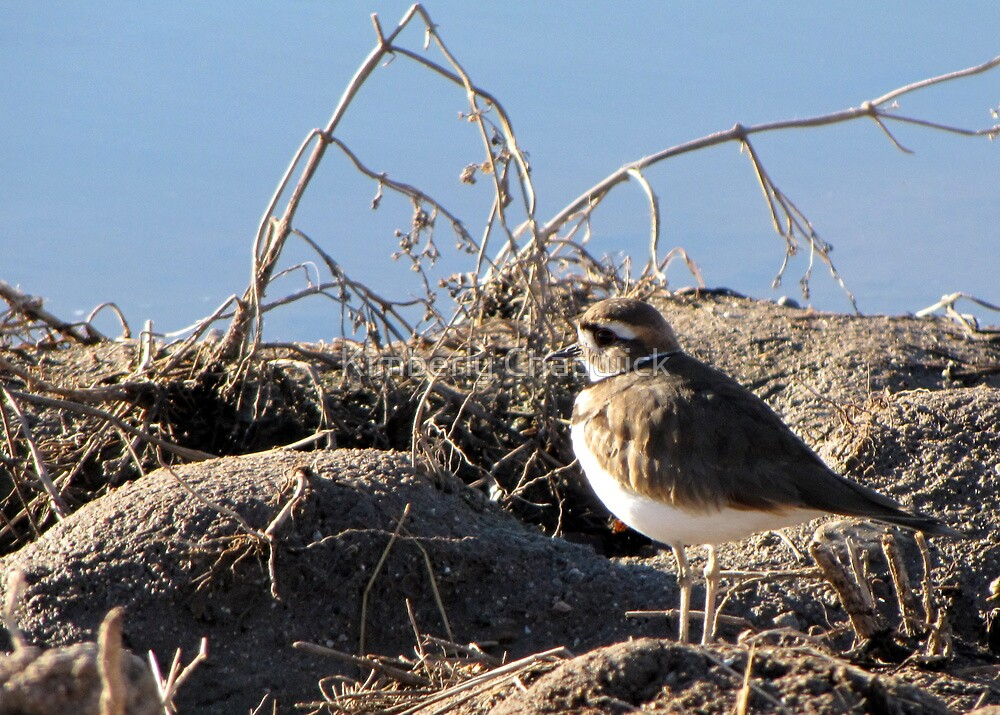 Killdeer by Kimberly Chadwick