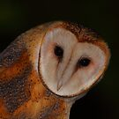 Barn Owl Portrait by naturalnomad