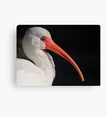 White Ibis Portrait Canvas Print