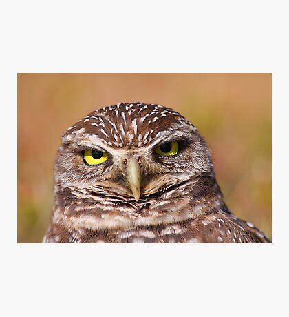 Burrowing Owl Portrait Photographic Print