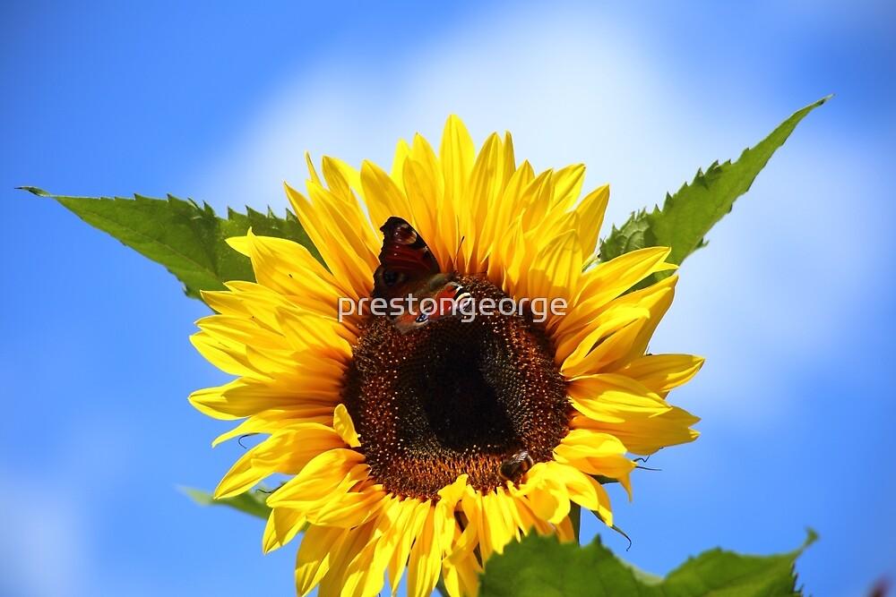 Sunflower Summer by prestongeorge