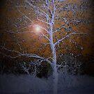 Solitude by linmarie