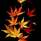 Autumn Leaves Dancing by Cara Schingeck