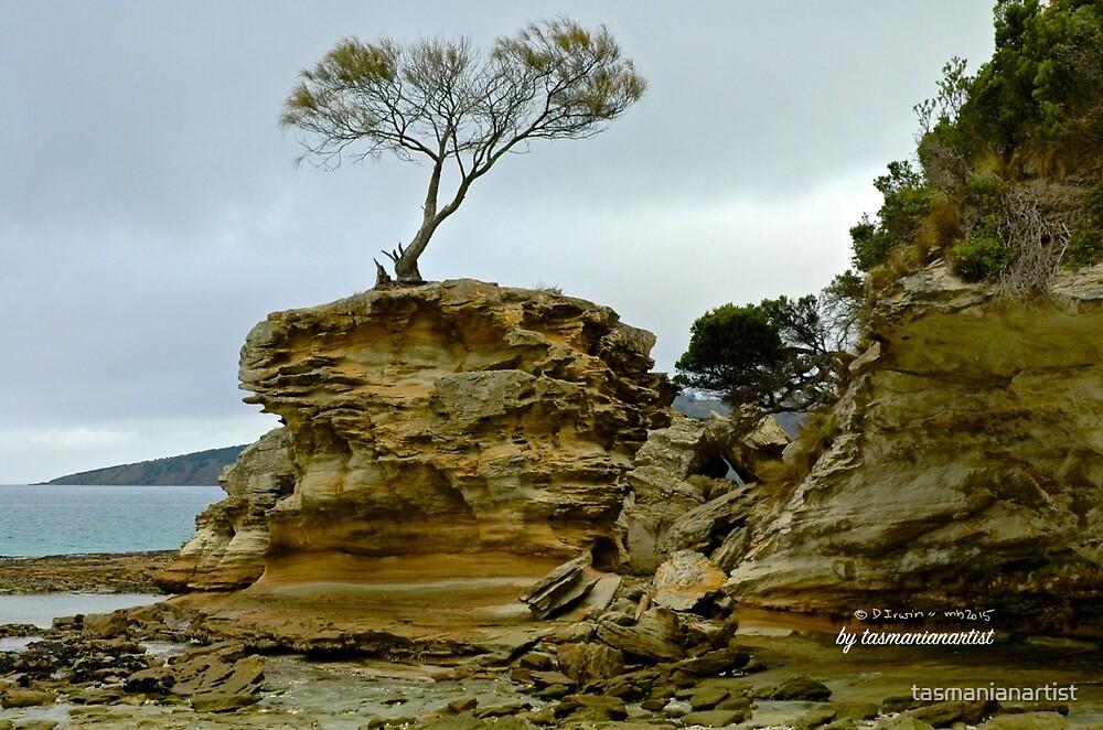 TASMAN PENINSULA ~ Lagoon Beach - Tree on Rock (2) by tasmanianartist by tasmanianartist