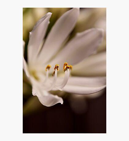 fleur 2 Photographic Print