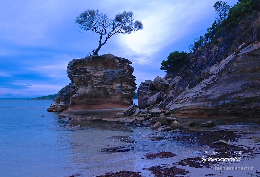 TASMAN PENINSULA ~ Lagoon Beach - Tree on Rock (3) by tasmanianartist by tasmanianartist