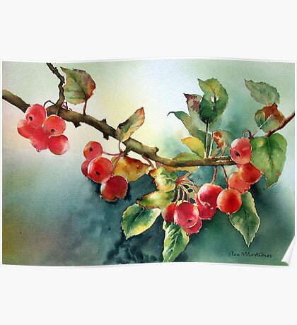 Crab apples after rain Poster