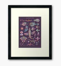 Sea life specimens III Framed Print