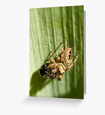 Jumping Spider and Wasp Lunch Greeting Card