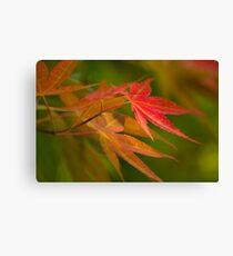 Japanese Maple Canvas Print