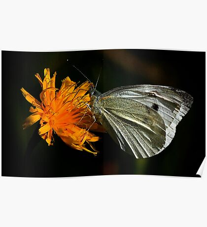 The Large White Poster