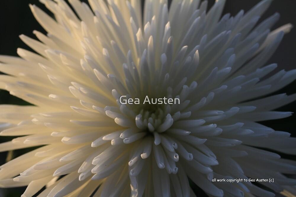 ALL WHITE CHRYSANTHEMUM 3 by Gea Austen