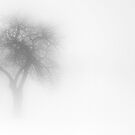 One Tree in Fog by Mary Ann Reilly