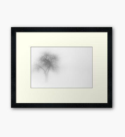 One Tree in Fog Framed Print