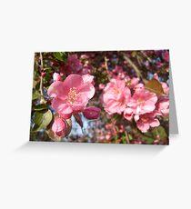 Apple Blossom - Shallow Focus Greeting Card
