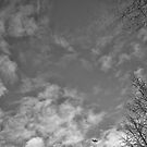 Sky Is The Limit by Dragomir Vukovic