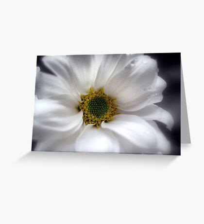 Tears On My Pillow.............Gerbera Greeting Card