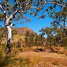 Roadside, Kimberleys, Western Australia. by johnrf