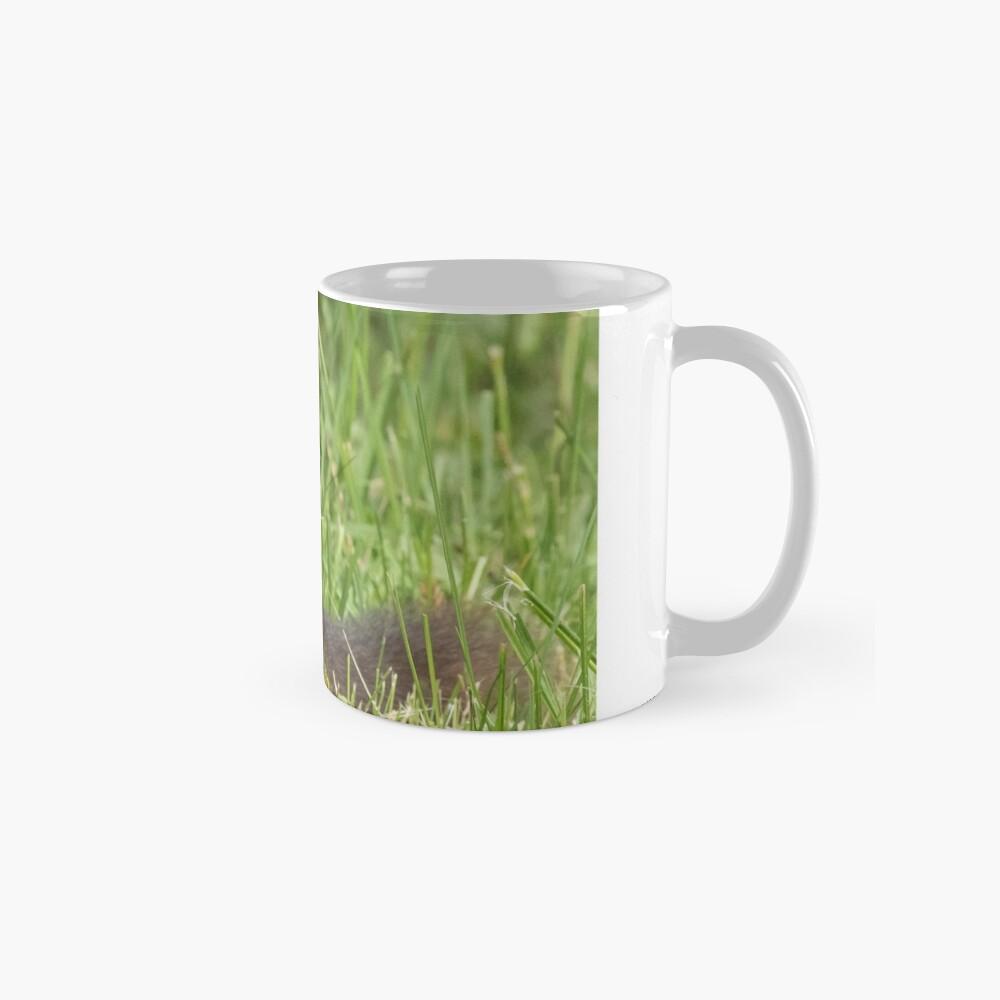 Squirrel in the grass Mug