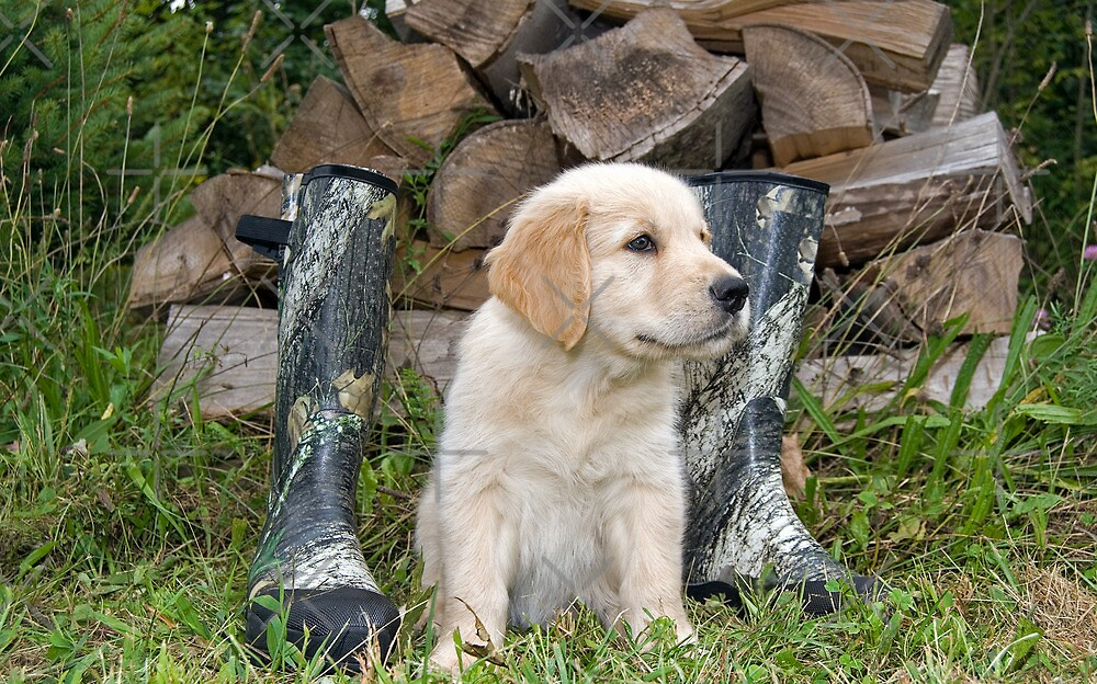 Pup 'N Boots by Maria Dryfhout