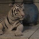 White Tiger by Ciarra Ornelas