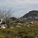 Pano of The Hump, Mount Buffalo by Colin12