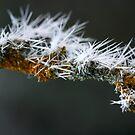 monster almond tree by yvesrossetti