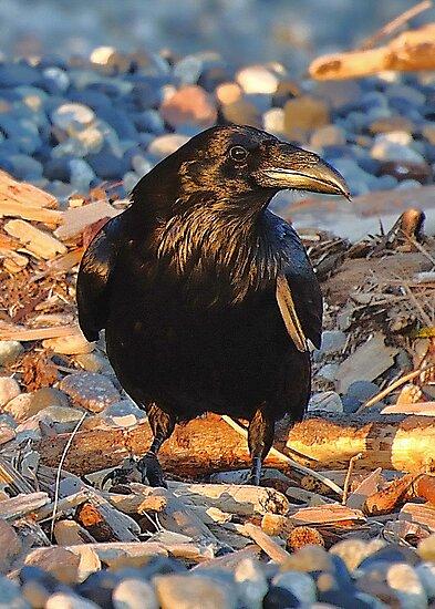 Raven at Sundown by Carl Olsen