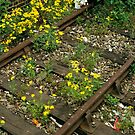 Disused Railway Track. by David A. L. Davies