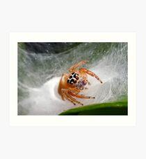 Jumping 'Shy' Spider Art Print