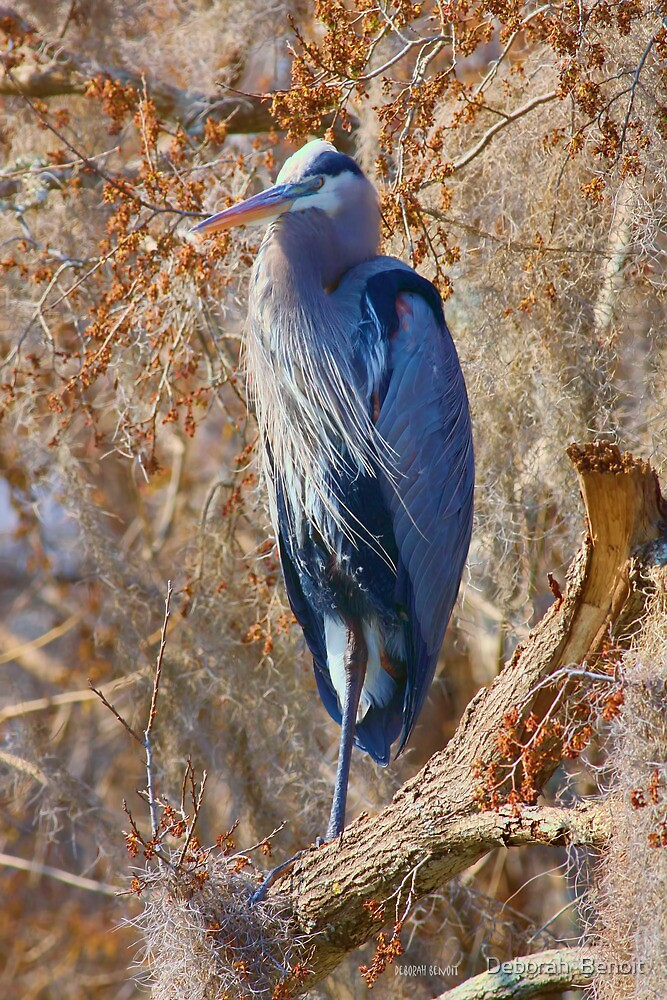 Blue Among The Moss by Deborah  Benoit