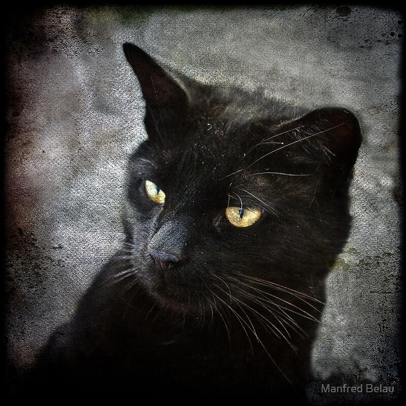 Quot Black Cat With Yellow Eyes Quot By Manfred Belau Redbubble