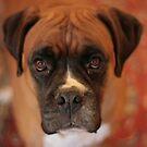Gorgeous George by Pamela Jayne Smith