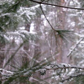 Pine by BashsArt