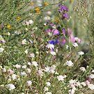 Desert Wildflowers Coachella Wildlife Preserve by Colleen Cornelius