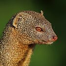 Profile of a Slender Mongoose! by Anthony Goldman