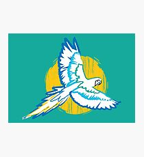 Macaw Blue and Yellow Bird Tropical Photographic Print