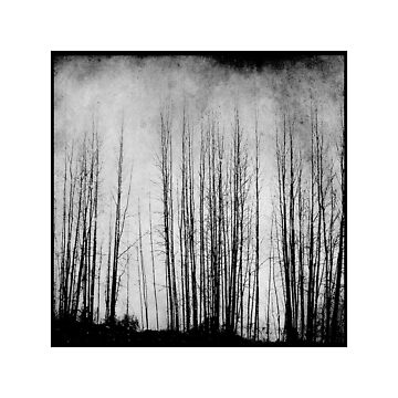 Arbres by ajlphotography