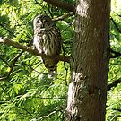 Owl at Van Dusen Botanical Garden Vancouver Canada by EloiseArt
